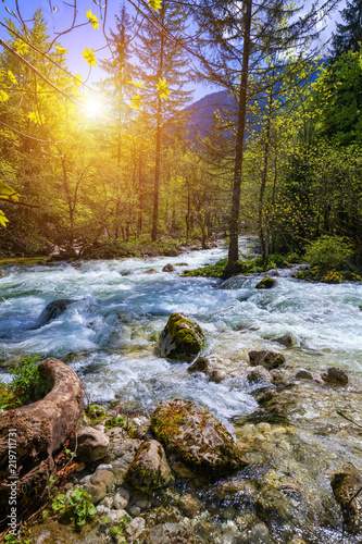 Beautiful colorful summer landscape with a stream and forest. The river in summer forest and the sun shining through the foliage. Summer nature landscape. Bohinj, Slovenia - 219711731