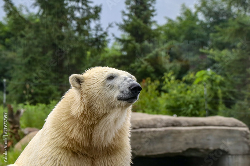 Tuinposter Ijsbeer Polar Bear Head