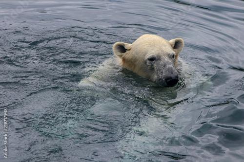 Staande foto Ijsbeer Polar Bear in Water