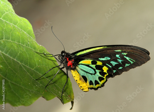 Colorful Butterfly on leaf