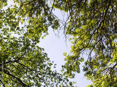 Foto op Canvas Bomen spring, a background of green leaves of a tree