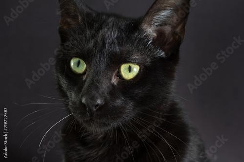 Fotografia  Halloween concept, Black cat