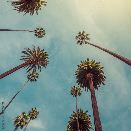 Los Angeles palm trees, low angle shot. Vintage tone