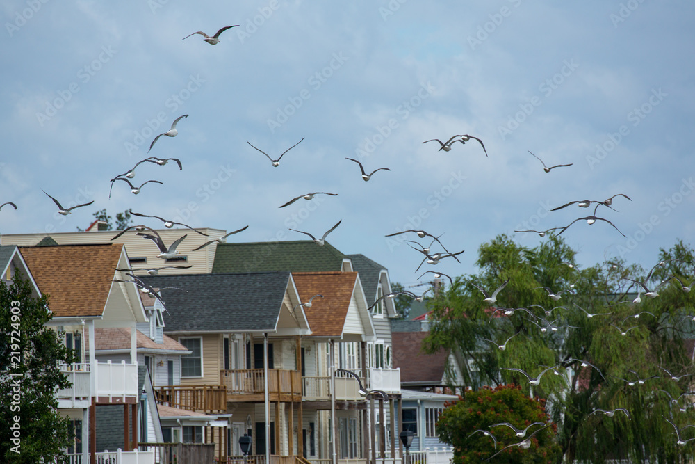 a flock of seagulls flying over roof tops at North Beach Maryland along the Chesapeake Bay in Calvert County Southern Maryland USA