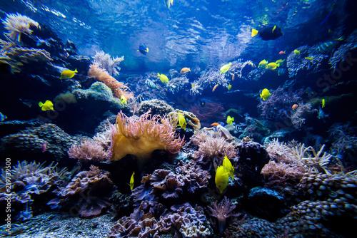Fototapety, obrazy: beautiful underwater world