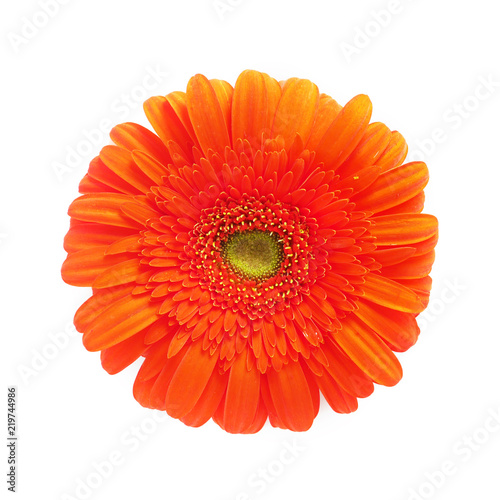Orange gerbera flowers isolated on white background, top view