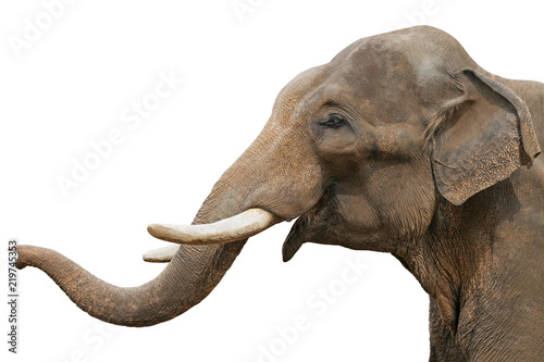 Poster de jardin Elephant Head of an elephant, isolated