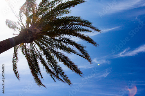 Staande foto Palm boom summer and travel background - green palm tree over blue sky