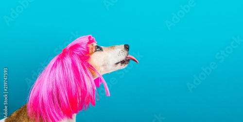 LOvely funny dog pet in bright pink wig with tongue licking Wallpaper Mural