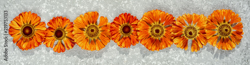 Fototapeta Border frame from autumnal orange flowers, helenium autumnale on a silver background, top view. obraz