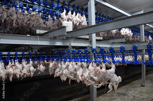 In the shop for the processing of poultry carcasses Canvas Print