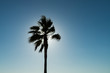 Silhouette of palm tree against sun and blue sky
