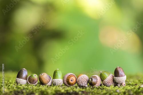 Eicheln auf Moos im Wald vor einem grünen Hintergrund
