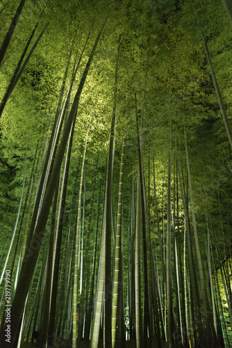 Foto op Plexiglas Bamboe Bamboo grove, bamboo forest at Arashiyama, Kyoto, Japan