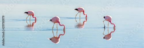 Keuken foto achterwand Flamingo Andean flamingos in Laguna Chaxa, Atacama salar, ChileAndean flamingos in Laguna Chaxa, Atacama salar, Chile