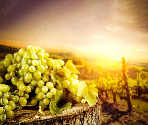 winogrona-w-winnicy