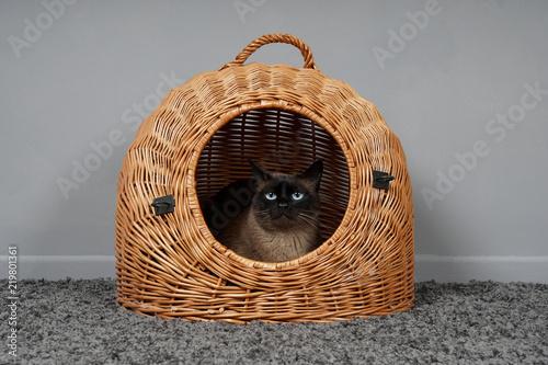 cat resting in wicker basket Canvas Print