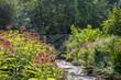 Summer plants bloom alongside a stream
