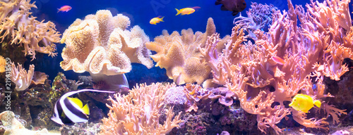 Poster Coral reefs Tropical fish with corals and algae in blue water. Beautiful background of the underwater world.