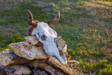 The Cow Skull On Top Of The St...