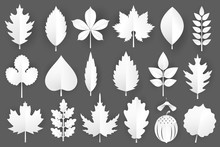 White Paper Cut Autumn Leaves Set. 3d Fall Elements Isolated On Gray Background.Vector Illustration.