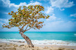Lone tree by the beach as waves from the blue aqua turquoise ocean come ashore, in Negril, Jamaica