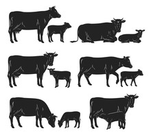 Vector Cow And Calf Black Silh...
