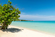 Almond tree providing shade on a sunny day along a beach in Negril, Jamaica.