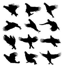 Black Grouse In The Flight Silhouette Set