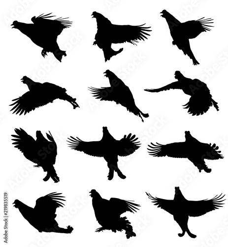 Tablou Canvas Black Grouse in the flight silhouette set
