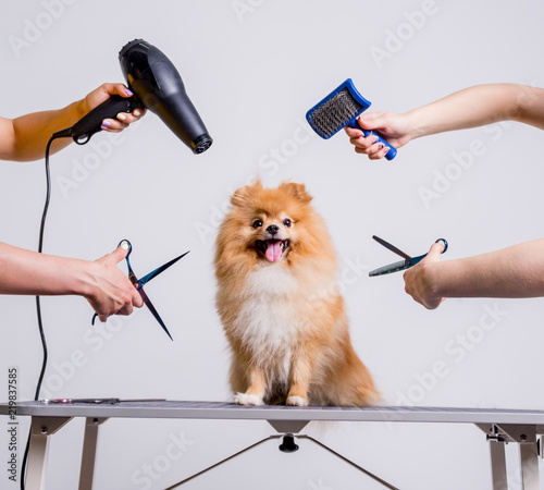 Fotografía Professional cares for a dog in a specialized salon