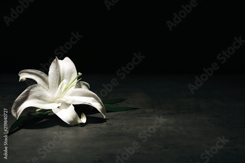 Fotografia  Beautiful lily on dark background with space for text