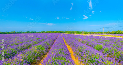 Photo  Lavender field in Luberon region, France