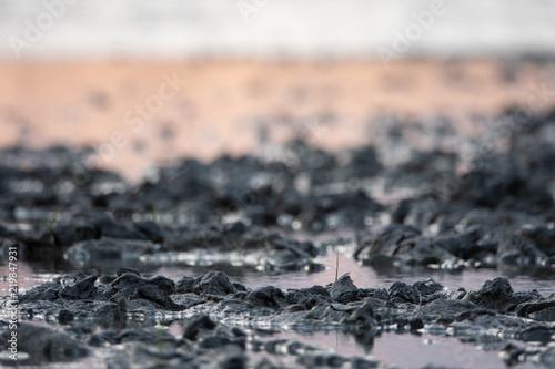 Fotomural  Kleine Pflanze wächst im Schlamm