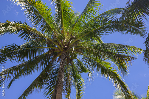 Deurstickers Palm boom Coco palm tree top on blue sky background. Beautiful tropical landscape photo. Exotic place for vacation.