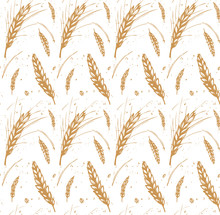Rye, Barley And Wheat Seamless Pattern With Drops And Ears. Color Hand Drawn Design For Organic, Bakery, Textile