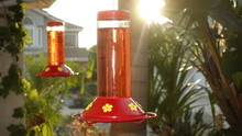 Two Red Hummingbird Feeders In...