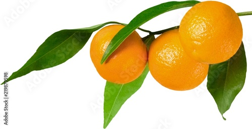 Fototapeta Oranges on the branch