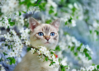 Panel Szklany Na szklane drzwi i okna Blue yed cat sitting on the blooming tree branch