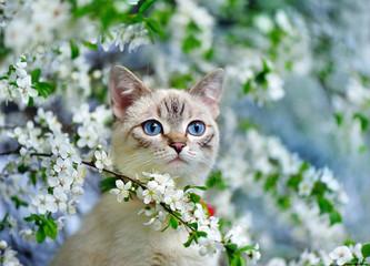 Naklejka Na szklane drzwi i okna Blue yed cat sitting on the blooming tree branch