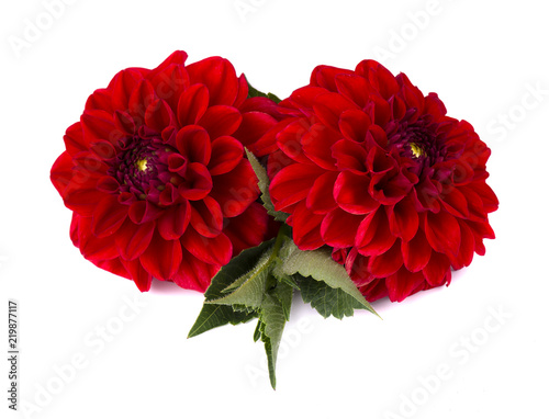 Poster de jardin Dahlia Two red dahlia flowers with leaves isolated on white background