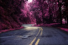 Winding Road Pink Trees