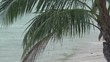 Tropical palm growing on wet sandy beach washed by sea waves under heavy rain. Amazing scenery or seaside landscape with ocean shore and exotic tree during rainfall. Monsoon season in tropics.