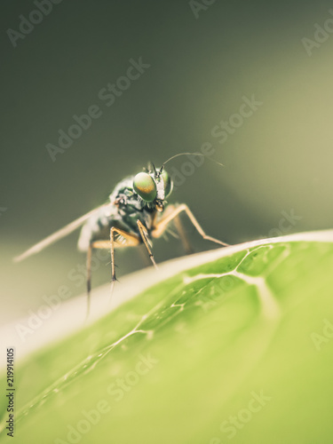Tuinposter Macrofotografie Macro insect portrait on green leaves and dark green nature background.