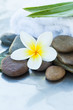Spa Flower and stones for massage treatment on white background.