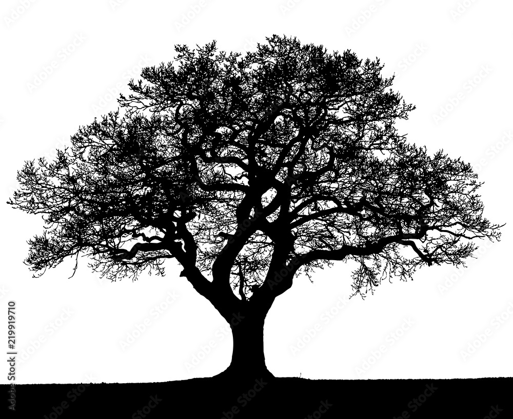 Fototapety, obrazy: Black and white silhouette of an autumn tree.