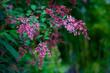 canvas print picture - Pflanzen, Friede, Garten , Frühling, Wandern, macro