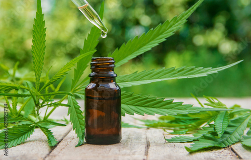 Fototapeta Cannabis herb and leaves for treatment broth, tincture, extract, oil. Selective focus. obraz