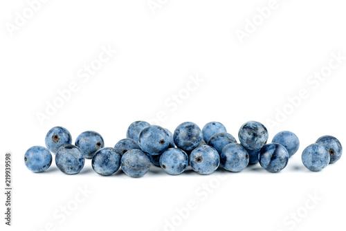 Photo  Blackthorn berries