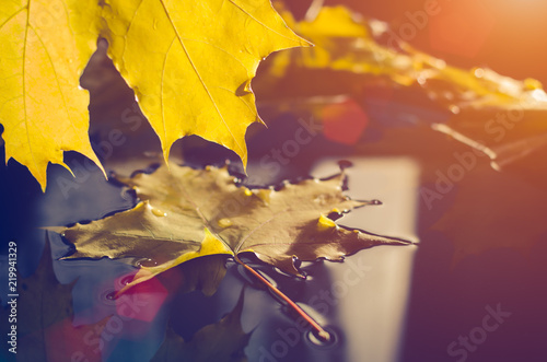 Yellow maple leaf floating on the water in sunlight